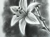 Drawings Of Flowers Realistic Image Result for Realistic Drawings Of Flowers Draw Pencil