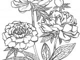 Drawings Of Flowers to Print Peony Flower Coloring Pages Download and Print Peony Flower
