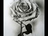 Drawings Of Flowers with Pen 25 Beautiful Rose Drawings and Paintings for Your Inspiration