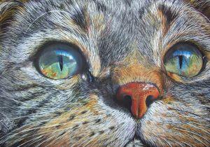 Drawings Of Galaxy Eyes Cat Color Pencil Drawing Colored Pencil Pencil Drawings