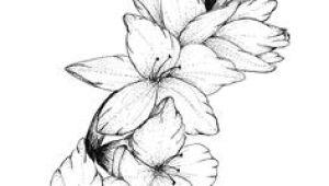 Drawings Of Gladiolus Flowers 2614 Best Gladiolus Images In 2019 Beautiful Flowers Planting