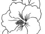 Drawings Of Hawaii Flowers 28 Best Line Drawings Of Flowers Images Flower Designs Drawing