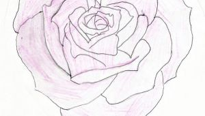 Drawings Of Heart Roses Heart Shaped Rose Drawing Heart Shaped Rose by Feeohnah Art