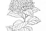 Drawings Of Hydrangea Flowers 62 Best Hydrangea Images Hydrangeas Watercolor Painting Flower Art