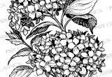 Drawings Of Hydrangea Flowers Hydrangea Botanical Psx Design Classics On Www