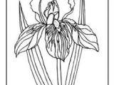 Drawings Of Iris Flowers Coloring Page Iris Flower Bing Images Line Drawings Of Irises
