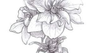 Drawings Of Larkspur Flower 35 Best Larkspur Tattoo Images Larkspur Tattoo Tattoos Larkspur