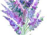 Drawings Of Lavender Flowers Lavender Flowersby Suren Nersisyan Products Pinterest