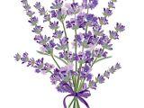 Drawings Of Lavender Flowers Pin Od Poua A Vatea A Valeria Mara Akova Na Nastenke Levandua A
