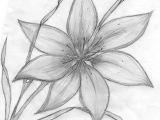 Drawings Of Lilies Flower Credit Spreads In 2019 Drawings Pinterest Pencil Drawings