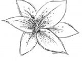 Drawings Of Lilies Flower Image Result for Sketch Lily Flower Craft Watercolor Techniques