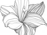 Drawings Of Lilies Flower Nicole Illustration Flower Power Patterns Drawings Flowers