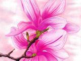 Drawings Of Magnolia Flowers Magnolia by Lauramel Deviantart Com On Deviantart Magnolia I