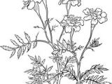 Drawings Of Marigold Flowers 53 Best Marigolds Images Marigold Flower Coloring Books Coloring