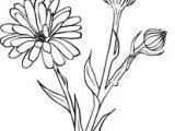 Drawings Of Marigold Flowers Active Herbs Wilderland organics Art Ideas Flowers In 2019