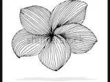 Drawings Of Plumeria Flower 192 Best Plumeria Images In 2019 Beautiful Flowers Hawaiian