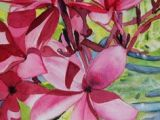 Drawings Of Plumeria Flower 218 Best Plumeria Images Plumeria Flowers Drawings Gardens