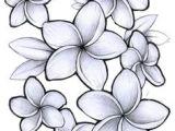 Drawings Of Plumeria Flower 70 Best Flowers Images In 2019 Ink Flower Designs New Tattoos