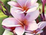 Drawings Of Plumeria Flowers 196 Best Plumeria Images In 2019 Beautiful Flowers Hawaiian