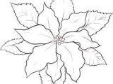 Drawings Of Poinsettia Flowers 16 Best Flowers Poinsettias Images Poinsettia Poinsettia Flower