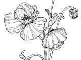 Drawings Of Poppy Flowers Image Result for How to Draw Line Art Poppies Coloring Line Art
