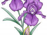 Drawings Of Purple Roses Flower Drawings Google Search Flowers Pinterest Flowers