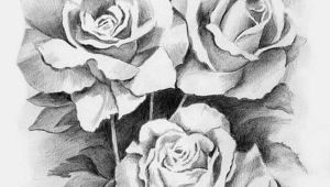 Drawings Of Real Roses Drawing Library Drawing Sketch Pencil Arts and Craft Ideas