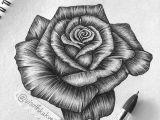 Drawings Of Roses In Pen Tb Ballpoint Pen Art Visothkakvei Zentangle Doodle Et Mandala