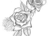Drawings Of Roses Tumblr Hoontoidly Roses Drawings Images