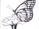 Drawings Of Roses with butterflies Drawings Of Flowers and butterflies My Drawing Of A butterfly by
