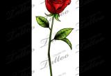 Drawings Of Single Roses Sbink Single Red Rose Tattoo Ideas Tattoos Rose Tattoos Single
