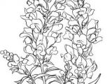 Drawings Of Snapdragons 624 Best Color Time Images Drawing Techniques Watercolor