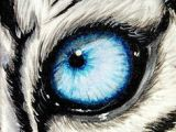 Drawings Of Tiger Eyes 10 Best Tiger Eye S Images Tiger Drawing Eyes Drawings Of Tigers