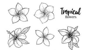 Drawings Of Tropical Flowers Image Result for Tropical Flowers Drawing Art Drawings Flower