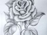 Drawings Of Two Roses 136 Best Rose Drawings Images Painting Drawing Painting On