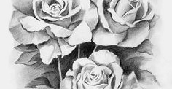 Drawings Of White Roses 172 Best Black and White Flowers Images Drawing Flowers Flower
