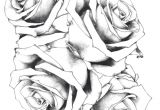 Drawings Of White Roses Rose Drawing Fresh 20 Awesome White Rose Flowers Black Ezba