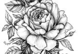 Drawings Of White Roses Rose with Banner New Easy to Draw Roses Best Easy to Draw Rose