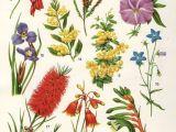Drawings Of Wildflowers Australian Flora Drawings Google Search Tattoos Pinterest