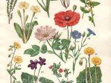 Drawings Of Wildflowers Single Stem Wildflower Drawings Botanicals Pinterest