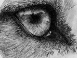 Drawings Of Wolf Eyes In Pencil Jay Jayjaythewolfie On Pinterest