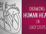 Easy Drawing for Class 1 Easy Way to Draw Human Heart Life Processes Ncert Class 10