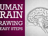 Easy Drawing for Class 1 How to Draw Human Brain In Easy Steps Control Coordination