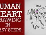 Easy Drawing for Class 1 How to Draw Human Heart In Easy Steps Life Processes Ncert Class 10