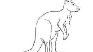 Easy Drawing Kangaroo 36 Best Kangaroos Images Drawings Kangaroo Drawing Character Design