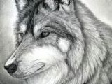 Easy Drawing Of A Gray Wolf 109 Best Wolf Images Wolf Drawings Art Drawings Draw Animals