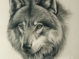 Easy Drawing Of A Gray Wolf 180 Best Wolf Drawings Images Drawing Techniques Drawing