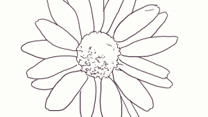 Easy Drawing Of Daisy Flower How to Draw A Realistic Daisy