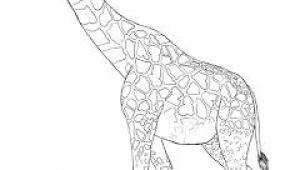 Easy Drawings Giraffe How to Draw A Giraffe orry Drawings Giraffe Drawing Art Drawings