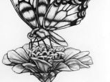 Easy Drawings Of Flowers and butterflies Drawings Of Flowers and butterflies My Drawing Of A butterfly by